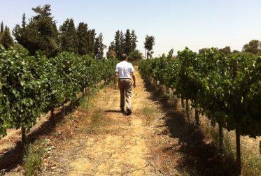 herzberg winery